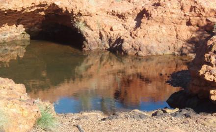 Biological Survey of Agnew Gold Mine