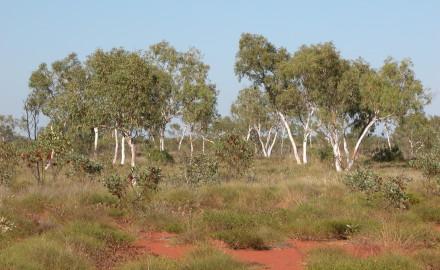 BHPBIO Hedland Land Use and Landscape Plan