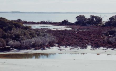 MCA & GIS Prioritisation of Remnant Vegetation