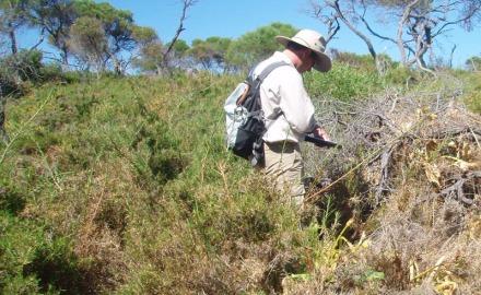 Garden Island Bush Condition & Weed Survey