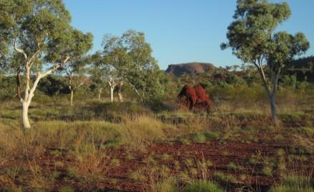 Western Hub Stage Two Flora & Vegetation Assessments