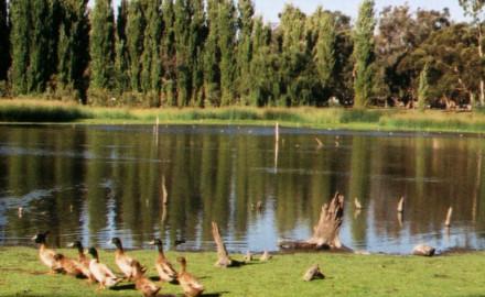 Western Suburbs Greening Plan