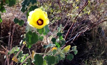 Rutila Rail Flora & Vegetation Surveys, Pilbara