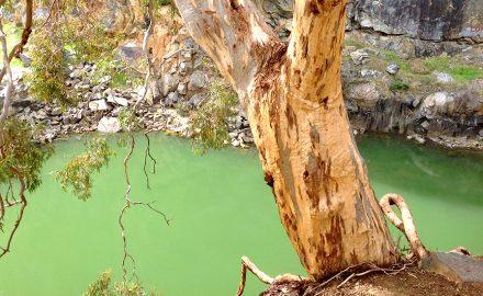 Ellis Brook Valley Environmental Management Plan