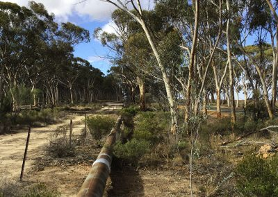 Goldfields & Agricultural Regions Operational Banding Program Ecological Surveys