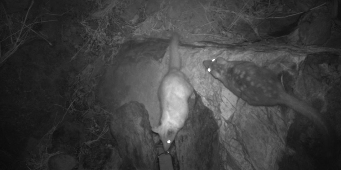 Roy Hill Culverts Fauna Research Advice Pilbara WA